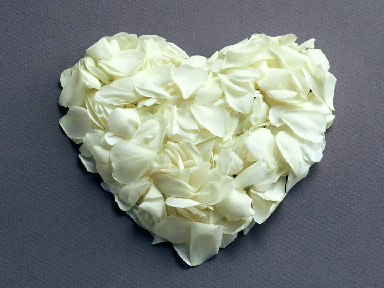 Galera de imgenes Rosas blancas