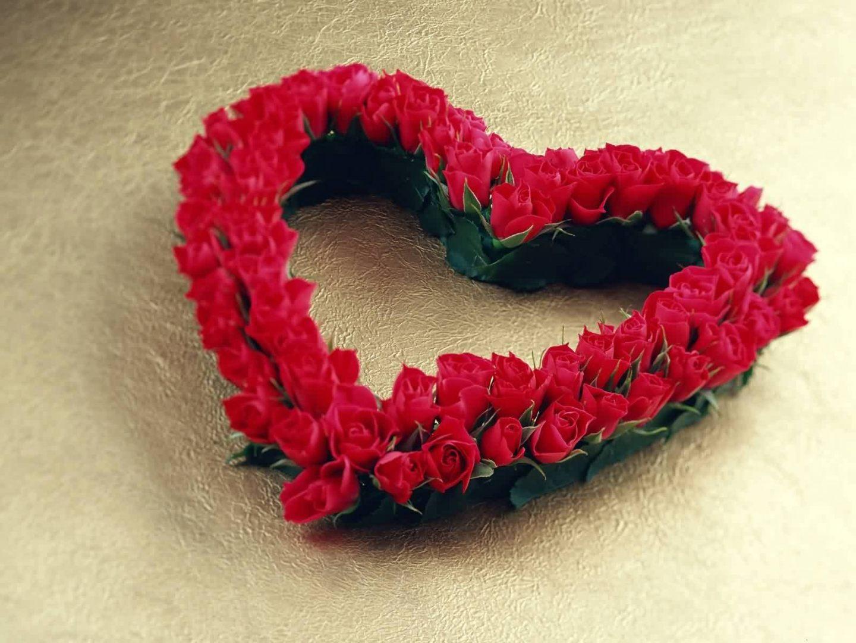 Galera de imgenes Fotos de rosas