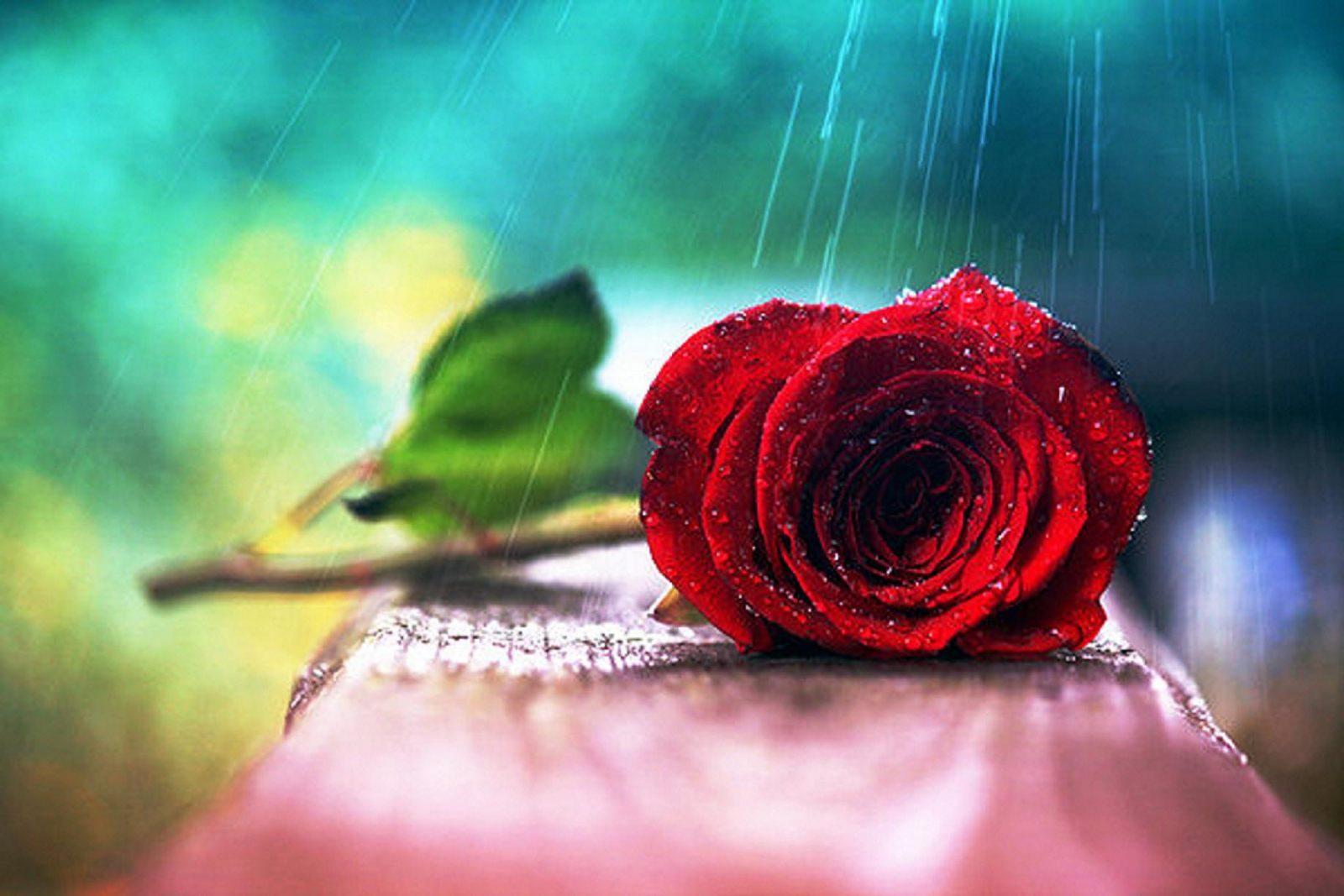 Flores | Fotos de flores, imagenes de flores fondos
