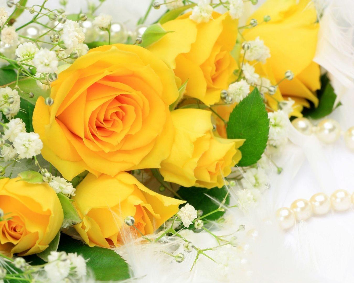 Большие картинки на рабочий стол красивые розы 17