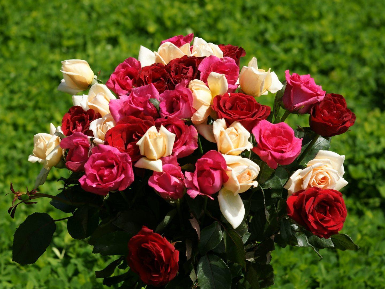 Ramo de rosas silvestres de colores