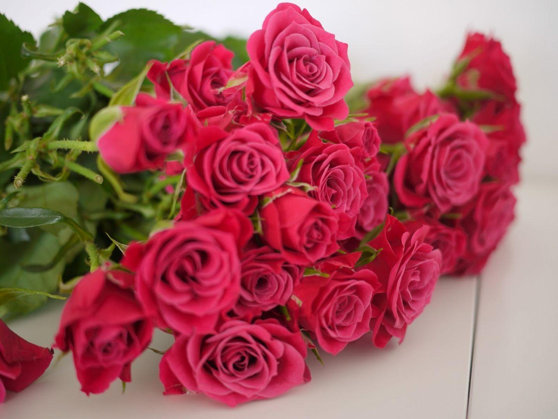 Rosa color rosa images galleries with - Fotos de rosas de colores ...