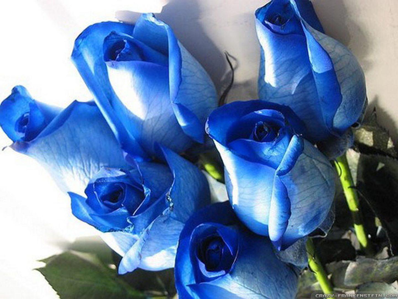 Ramos de rosas azules :: Imágenes y fotos