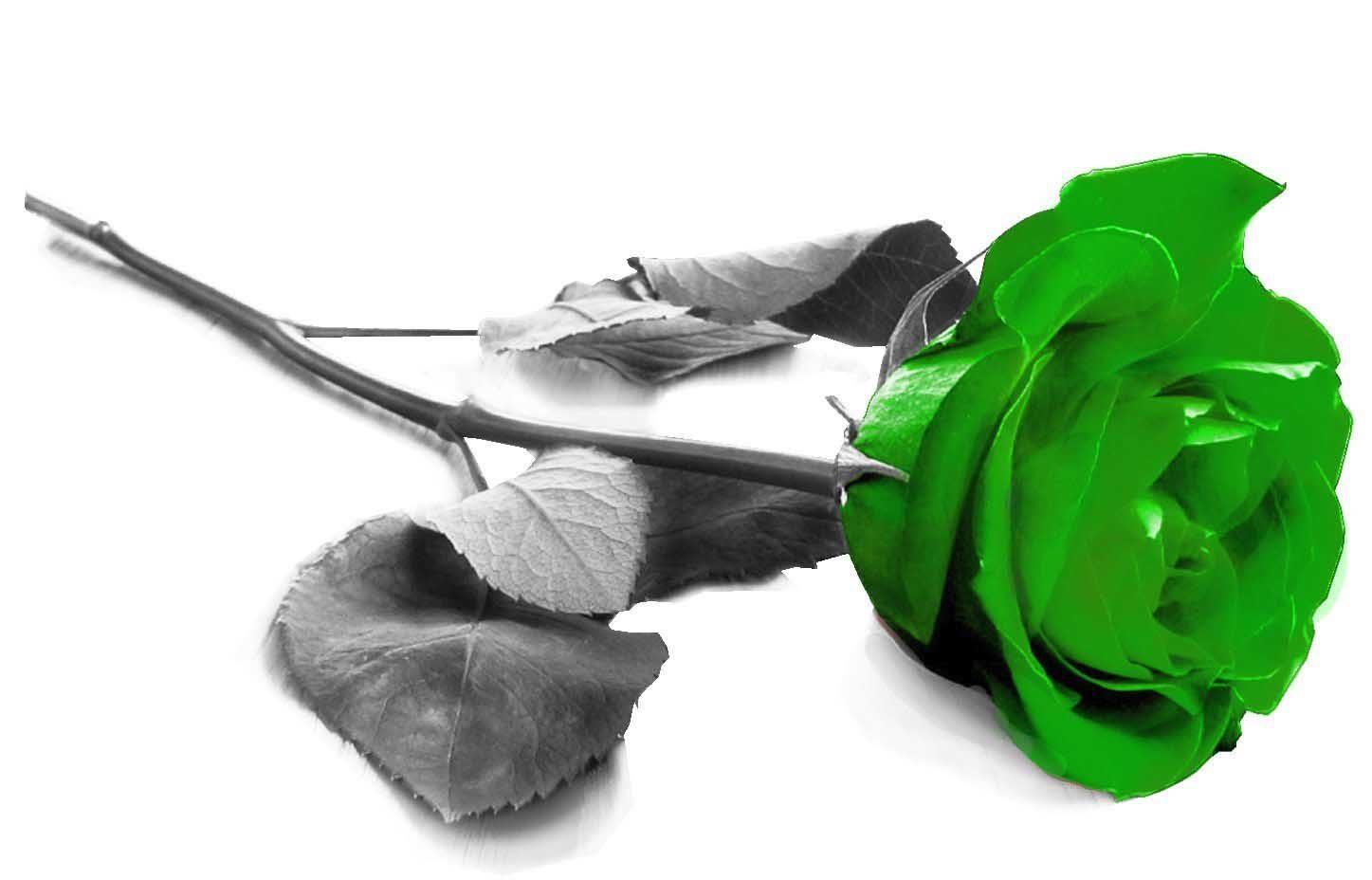 Palabra y Imagen - Página 43 Rosa-verde-3d