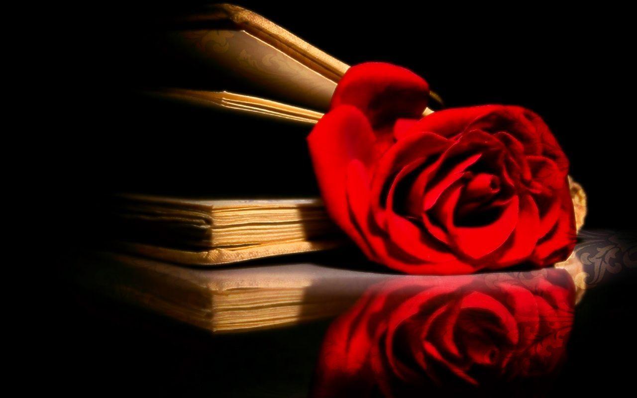 Imagenes de rosas y libros pictures to pin on pinterest - Imagenes de librerias ...