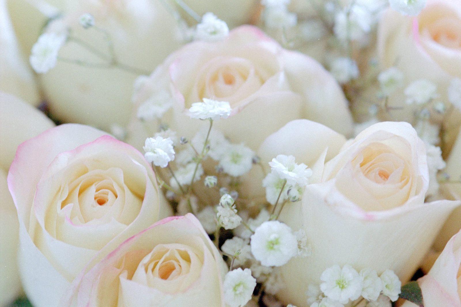Flores panama floristeria envio de flores y regalos a - Significado rosas blancas ...