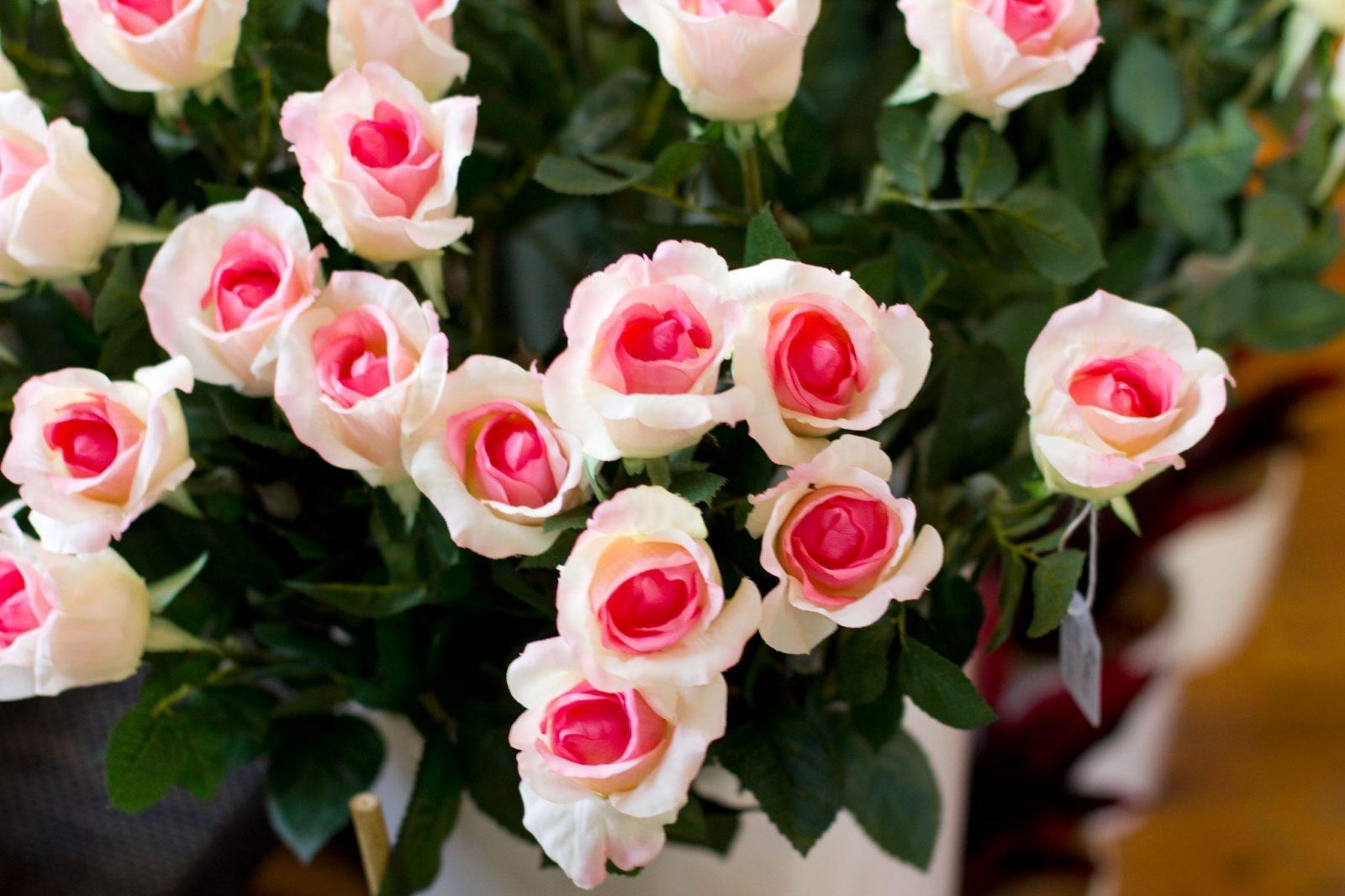 Rosas blancas rosadas