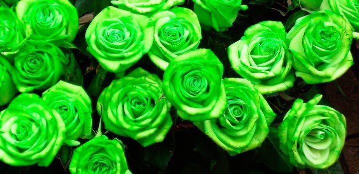 Resultado de imagen para flores verdosas